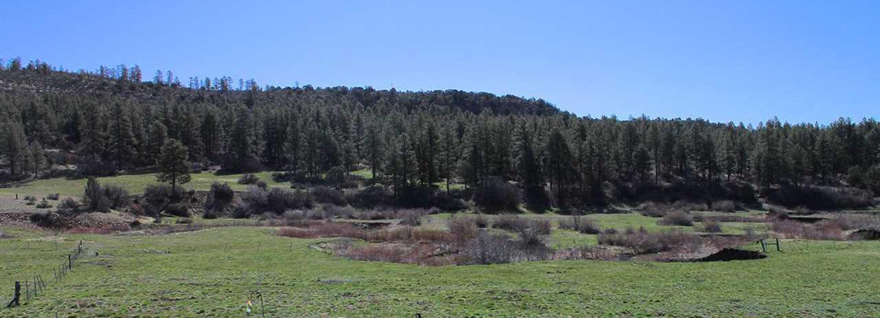 Colorado Horse Property Meadow