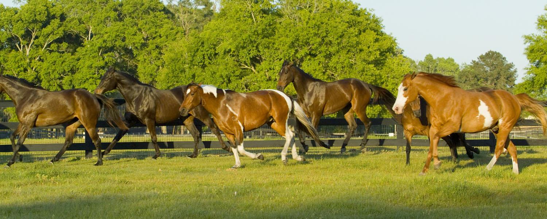 Horses on CO Horse Property