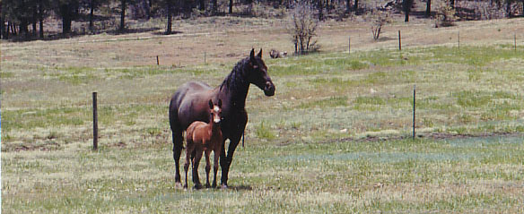 Horses On Durango Ranch